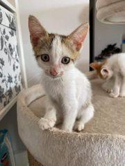 Kätzchen Stella sucht ein Zuhause