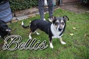 Bellis sucht ihre Traummenschen