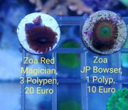 Zoas Red Magician JP Bowser -