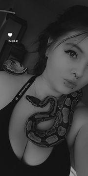 Nehme kostenlos ihre Reptilien Wirbellose