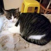 Katzenmädchen Lucy sucht schon so
