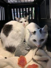 Geschwisterpaar sucht liebevolles Zuhause