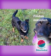 Findus- look at me 3