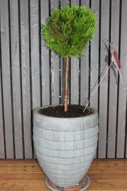 Outdoor Pflanzentopf inkl Pflanze