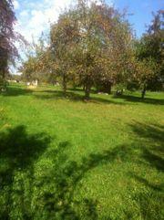 SUCHE Gütle Wiese Garten Streuobstwiese