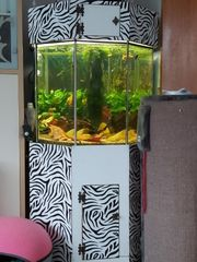 Aquarium 8eck