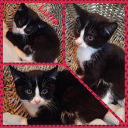 Wunderschönes Kitten Baby Katze Luna