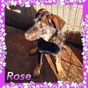Rose sucht ein Zuhause