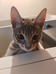 Wunderschönes Kitten Kätzchen