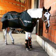 BEMER-Horse-Set Therapie Beratung