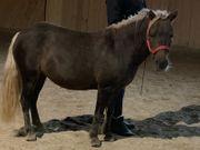 Hübsches liebes Pony