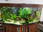 Aquarium - Juwel Vision 260 - komplett