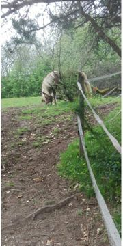 Pferde wegen Bestandsverkleinerung abzugeben