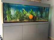 Aquarium komplett 540 Liter
