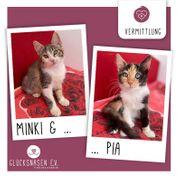Katzenmädels Minki und Pia suchen