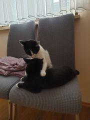 Suche Katzenbetreuung für Bella und