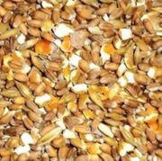 Hühner -Geflügelfutter Weizen Gerste und