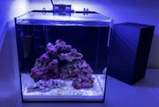Meerwasser Aquarium Waterbox Cube 10