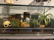 Achatschnecken mit Terrarium