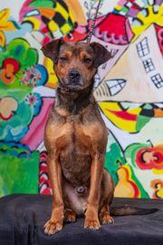 AMAR - Dem jungen sozialen Hundebub