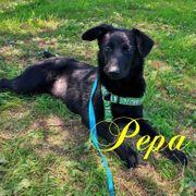 Pepa sucht ein Zuhause