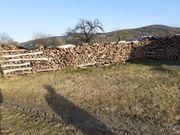 brennholz Buchenholz