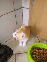 Katze Kitten Baby