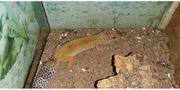 leopardengeckos zwei mädchen