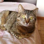 Katze Lizzi möchte Deine Welt