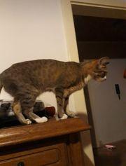 Katze vermisst Belohnung