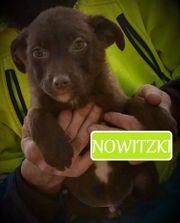 Nowitzki - verlieben erwünscht für ein