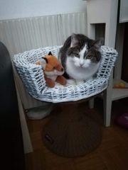 Katze in Bludenz vermisst
