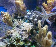 Meerwasser Korallen Paket 10 Korallen