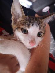 Kätzchen Katzenbaby Kater