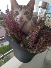 Süße Maikatze sucht neues Zuhause