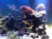 500 Liter Meerwasseraquarium im Betrieb