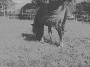 Pflegebeteiligung für Pony gesucht