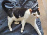 Katze Lilli sucht neues zu