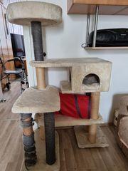 Katzen Kratzbaum und Toilette billig