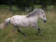 Suche Seniorenresidenz für meinen Ponywallach
