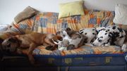 Tagesbetreuung Urlaubsbetreuung für Hunde