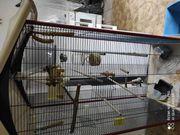Ferplast Montana große Vogel Voliere