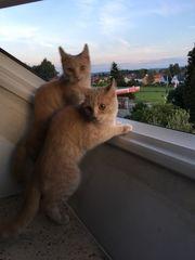 2 Kätzchen