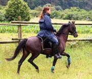 Hackney Pony sehr schicke Stute