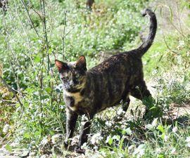 Katzen - LENA - Wunderbares Katzenmädchen sucht ihre