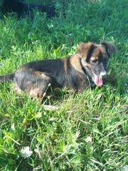 Marla - ein Hundemädchen das glücklich