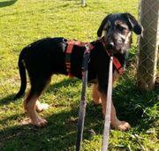 Bady- Hundejunge aus dem Tierschutz