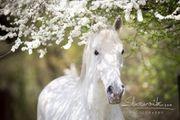 Pferdepfleger in gesucht