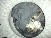 Kitten abzugeben
