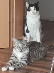 2 kater suchen ein Zuhause